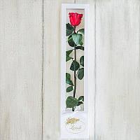 Роза в коробке standard 830049