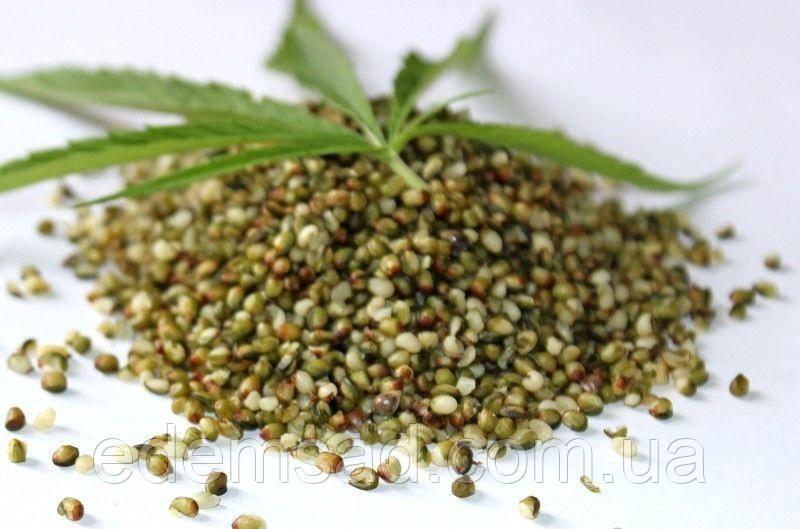 Принимают с семенами конопли аналог конопли