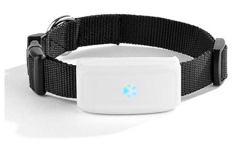 Ошейник с GPS трекером для средних  собак и кошек Влагозащита IP66  TKSTAR ТК-911