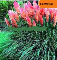 Пампасная трава семена 30 семян один лот