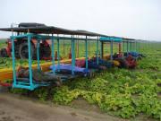 Платформа для збирання овочів VDB-1А