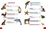 Где живут животные? От ленивца до тюленя, от акулы до оленя!., фото 2