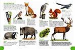 Где живут животные? От ленивца до тюленя, от акулы до оленя!., фото 3