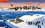 Где живут животные? От ленивца до тюленя, от акулы до оленя!., фото 4