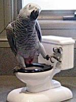 Приручение попугаев.
