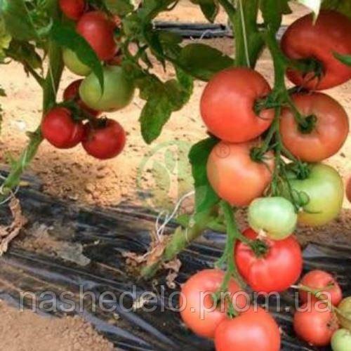 Ризотта томат 250 сем. Соларе Сементи