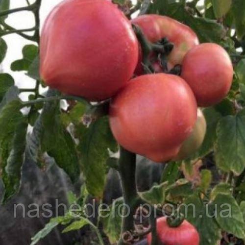 Глорианс томат 250 сем. Соларе Сементи