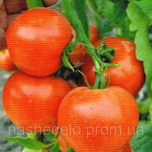 Риксос томат 1000 сем. Соларе Сементи