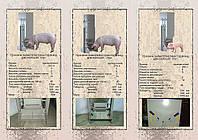 Кормушки для свиней