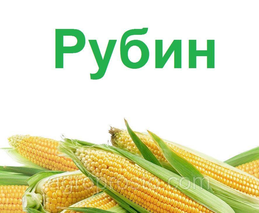 Гибрид кукурузы ДН Рубин (ФАО 290)