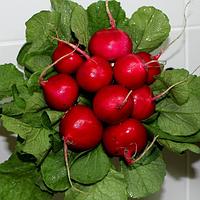 Семена редиса Диего F1, Hazera 250 грамм, фото 1