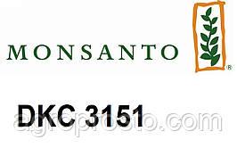 Семена кукурузы Монсанто ДКС 3151 (Dekalb) ФАО 200