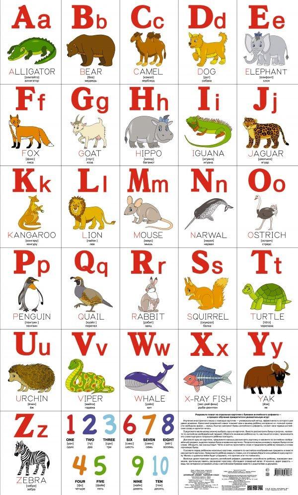 Английский алфавит. Разрезной плакат