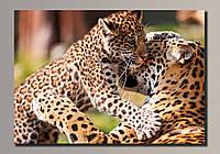 """""""Леопарды 1"""" Картина на холсте для интерьера"""