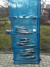 Сушилка 5 полок  для рыбы, фруктов и грибов 45×45×1м, фото 2