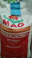 Семена кукурузы кормовой ранней Дебрецен 285, 1 кг  Венгрия