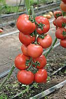 Семена томата Пинк Джаз F1, Hazera 500 семян | профессиональные, фото 1