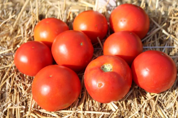 Семена томата Волна F1, Hazera 1 000 семян | профессиональные