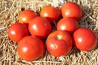Семена томата Волна F1, Hazera 1 000 семян | профессиональные, фото 1