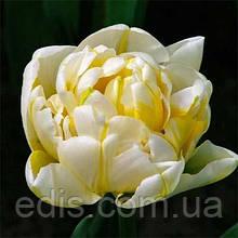 Тюльпан Flaming Evita (Флемин Эвита) махровый поздний 3 луковицы