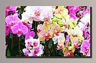 """Орхидеи 1"" Картина на холсте для интерьера"