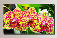 """Орхидеи 3"" Картина на холсте для интерьера"