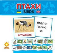 Картки міні ПТАХИ (10*10) Укр (Зірка)
