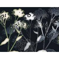 Фотообои Komar Цветы черно-белые 8-898