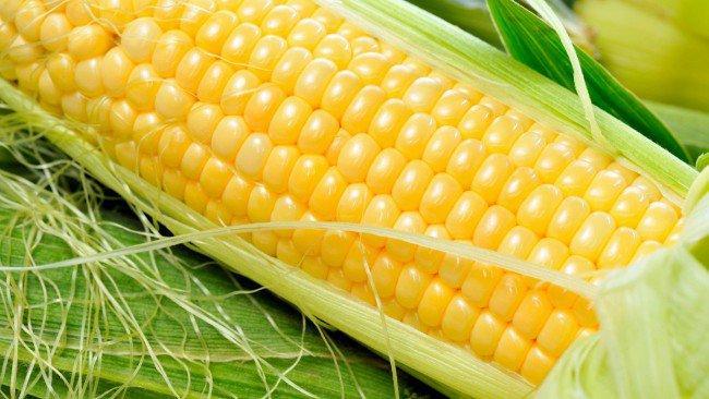 Семена кукурузы Гран Аттракт (ФАО 230)