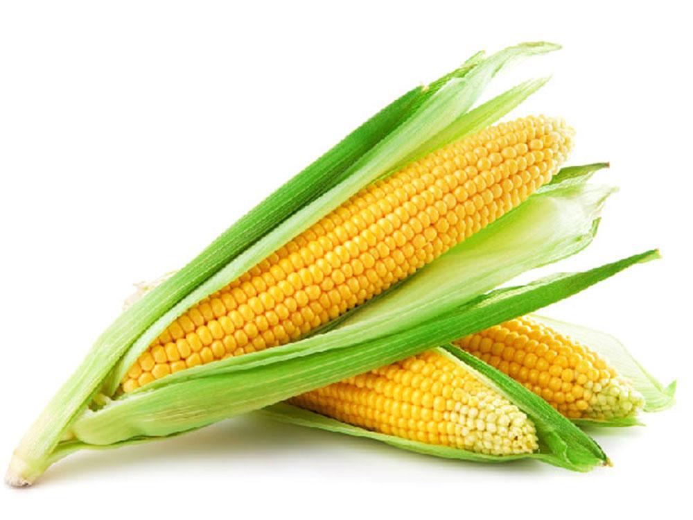 Семена кукурузы Гран Біг Стар (ФАО 220)