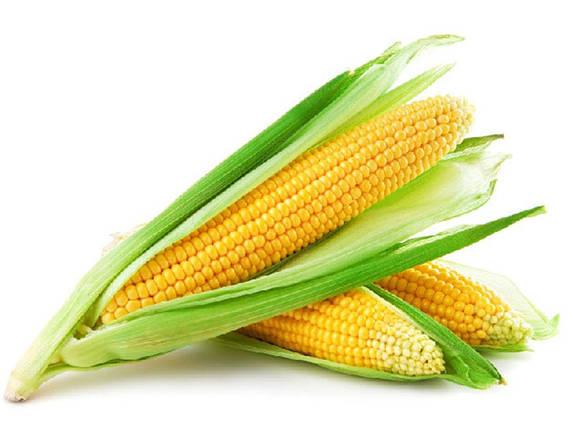 Семена кукурузы Гран Біг Стар (ФАО 220), фото 2