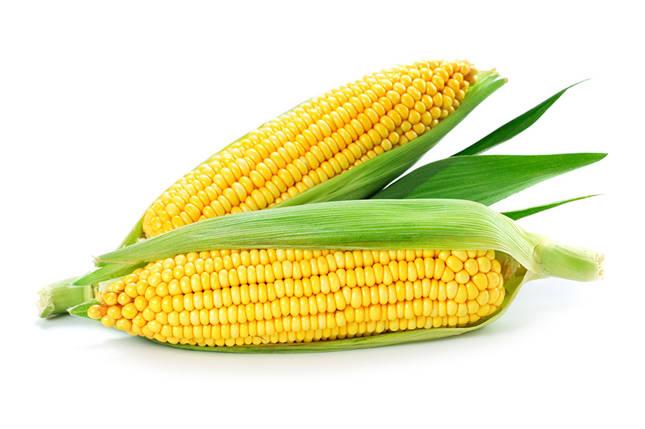 Семена кукурузы Гран Гран 310 (ФАО 250), фото 2
