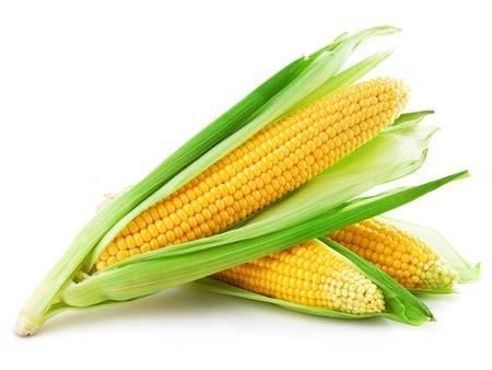 Семена кукурузы Гран ДК Гарант (ФАО 200)