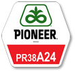 Семена кукурузы Pioneer PR38A24 ФАО 390