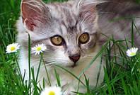 Как удалить запах от меток кота?