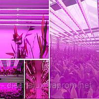 Фитолампа для растений T8 Led 60W  G13 1200mm  230V, фото 5