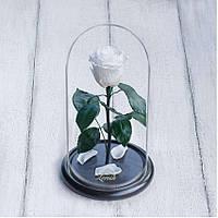 Стабилизированная роза в колбе Lerosh - Mini 27 см, Белая - 138905