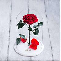 Стабилизированная роза в колбе Lerosh - Premium плюс 33 см, Красная, на белой подставке - 138967