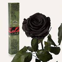 Долгосвежая роза Черный Бриллиант 5 карат на коротком, Долгосвежая троянда Червоний Рубін в подарунковій упаковці (не в'януть від 6 місяців до 5