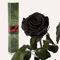 Долгосвежая роза Черный Бриллиант 7 карат (короткий стебель), Долгосвежая троянда Чорний Діамант 7 карат (коротке стебло), Долгосвежие розы
