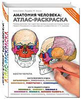 Анатомия человека: атлас-раскраска. Элсон Л., Кэпит У.