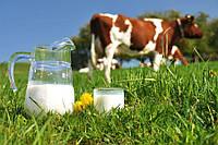 До 2020 року в Україні продовжуватимуть приймати домашнє молоко 2-го ґатунку
