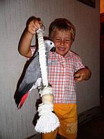 Жако (птенцы ручного докормления) 5-6 мес., фото 1