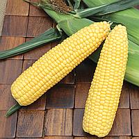 КУКУРУЗА сладкая Микрозелень,  семена зерна кукурузы органические для проращивания 100 грамм, фото 1