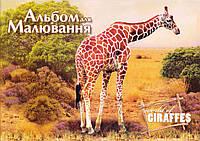 """Альбом 12 л. """"Сафари"""" 1В865"""