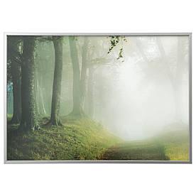 IKEA BJORKSTA (291.778.66) Изображение с рамкой, лесной дорожкой, серебром