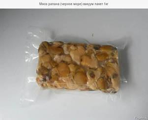 Мясо рапанов варено-мороженое  УЖЕ В НАЛИЧИИ, фото 2