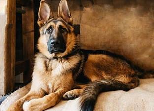 Наборы алмазной вышивки - собаки, лисички
