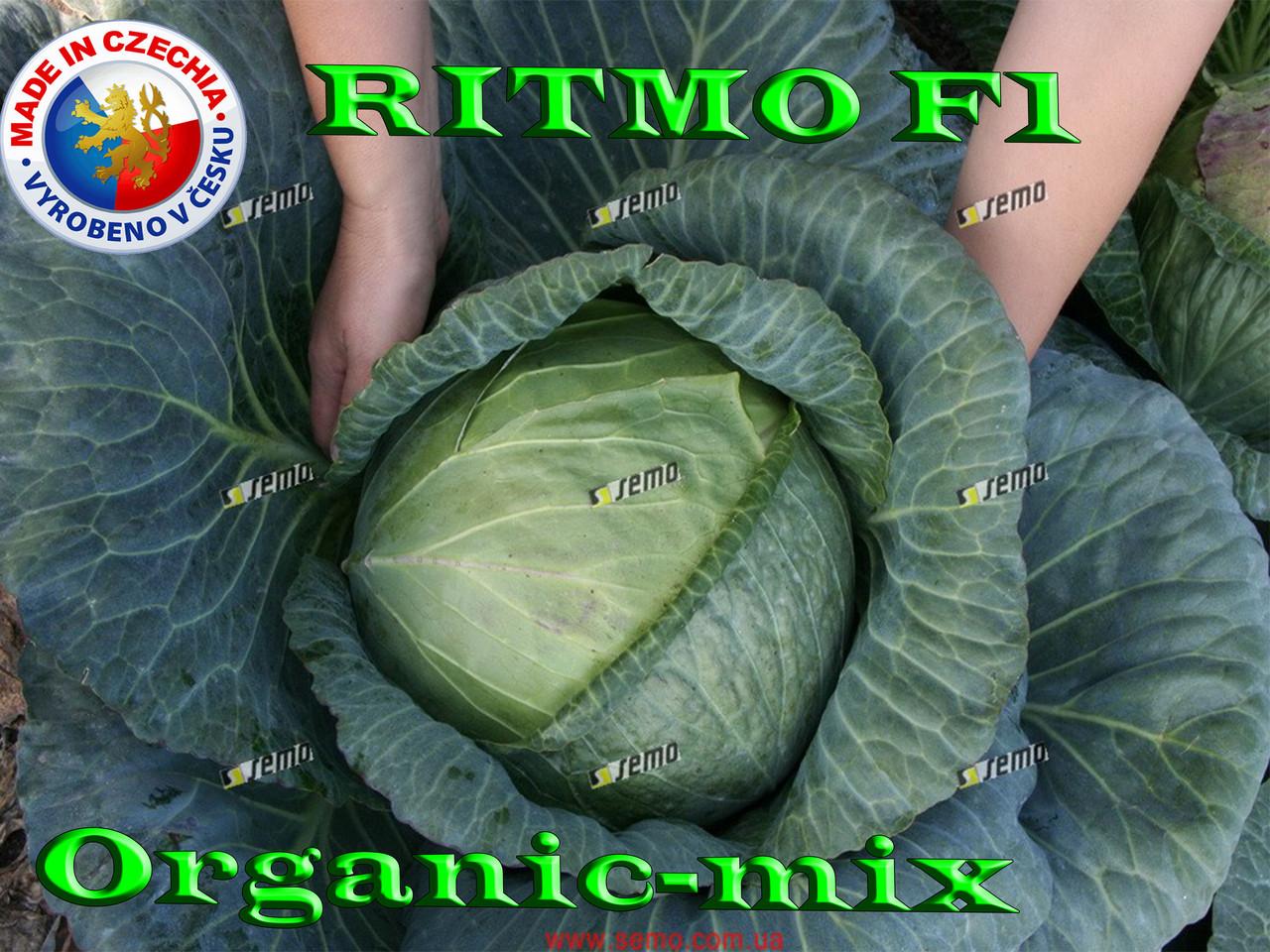 Капуста поздняя Ритмо F1  / Ritmo F1, 1000 семян ТМ Semo (Чехия)