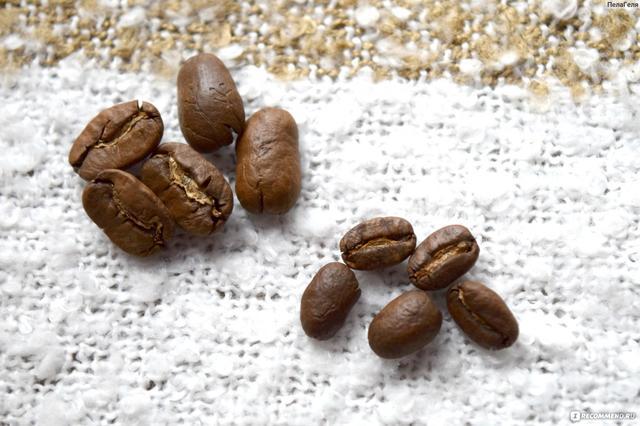 Размер зерен кофе Никарагуа Марагоджип, где можно купить